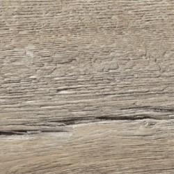 33704 Dub starý Maremma